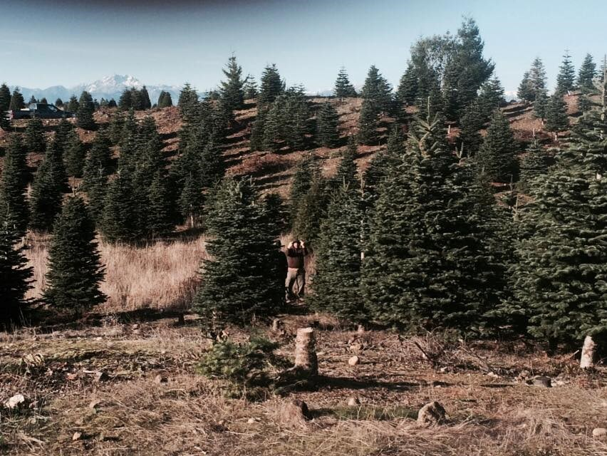 "Alpine ""U"" Cut Christmas Tree Farm"