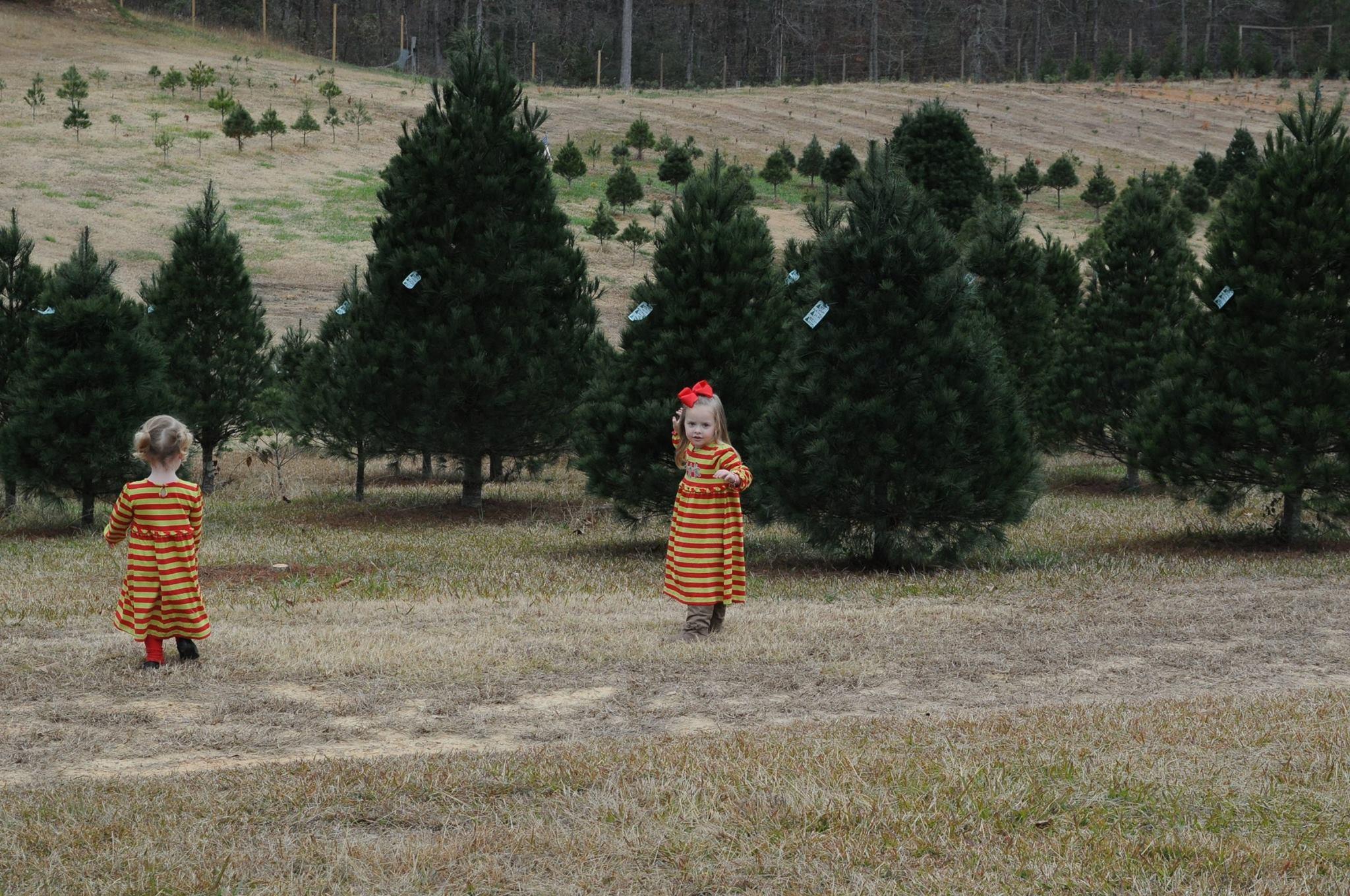 Beavers Christmas Tree Farm christmas tree farm ...