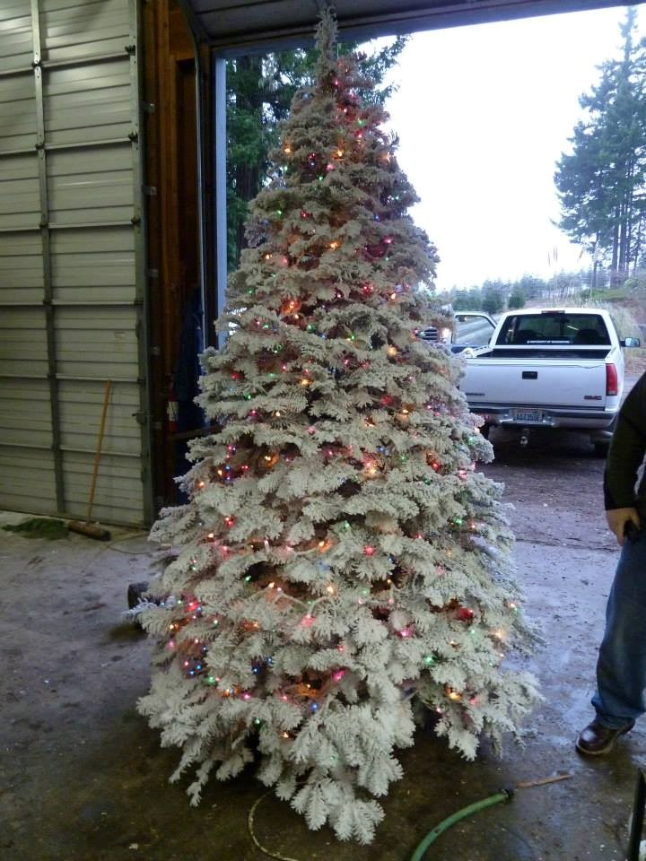 Hubert's Christmas Trees christmas tree farm ...