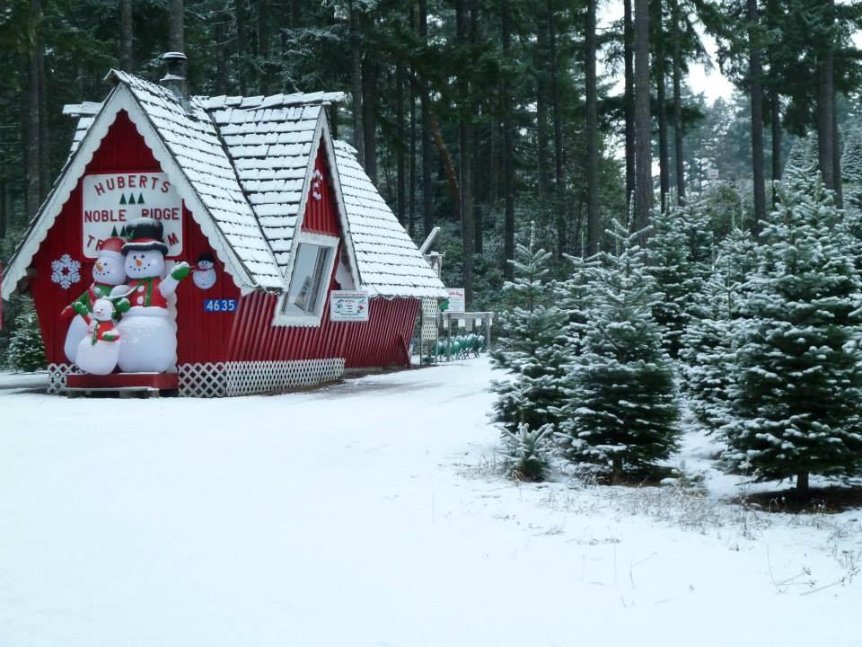 Hubert's Christmas Trees Christmas Tree Farm