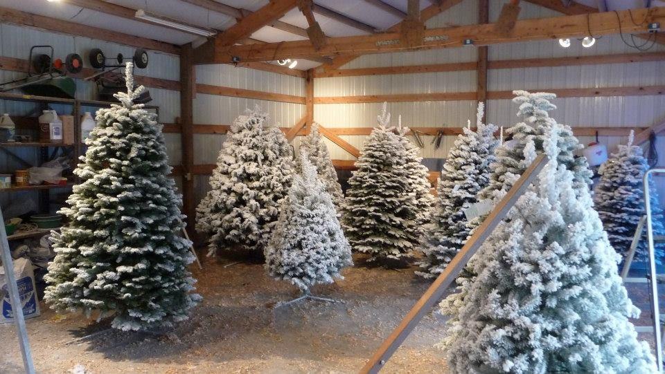 The Wreath Works christmas tree farm | ChristmasTreeFarms.net