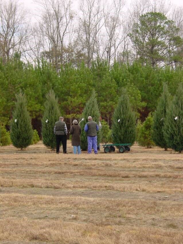 Wadsworth Christmas Tree Farm christmas tree farm ...