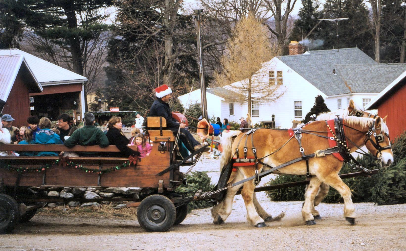 Jones Family Farms christmas tree farm ...