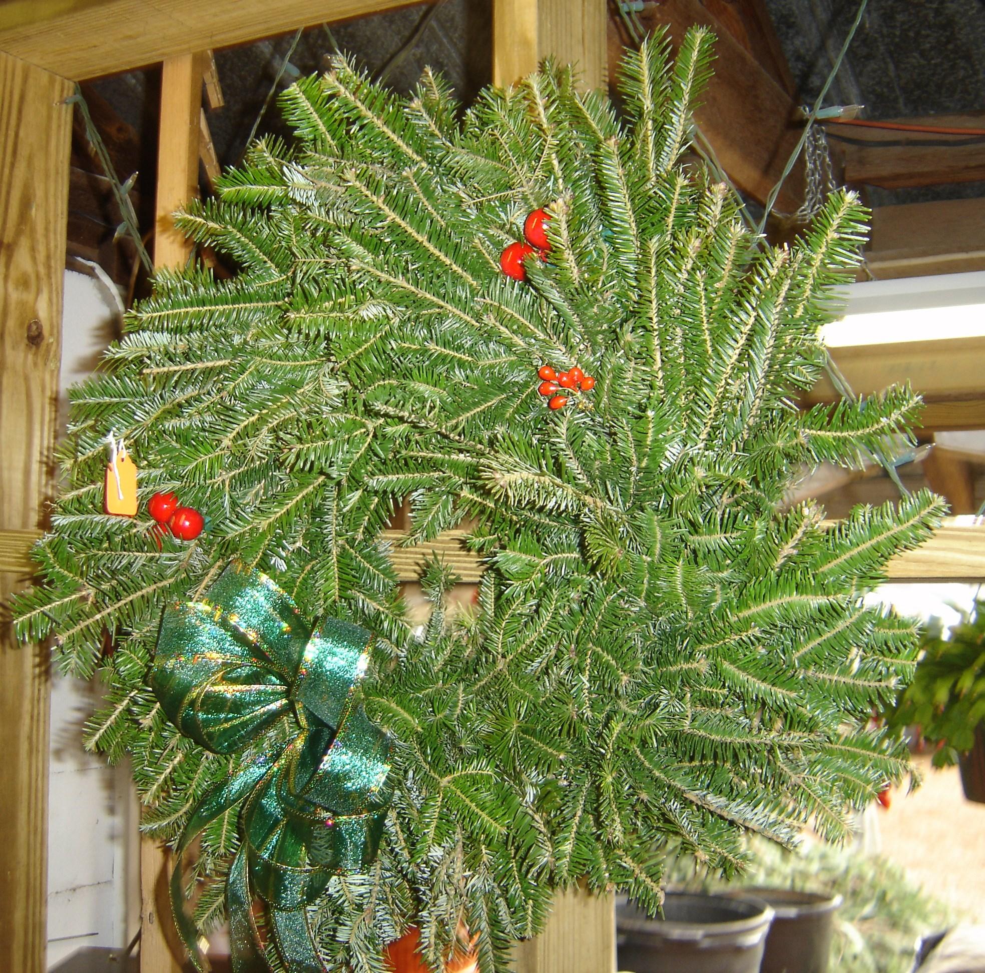 Cut Your Own Christmas Tree York Pa: Ergle Christmas Tree Farm Christmas Tree Farm