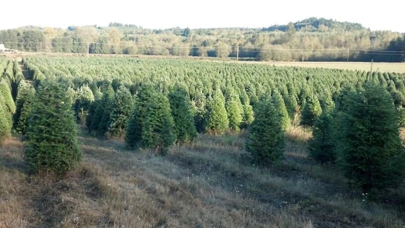 Christmas Tree Farms Nj