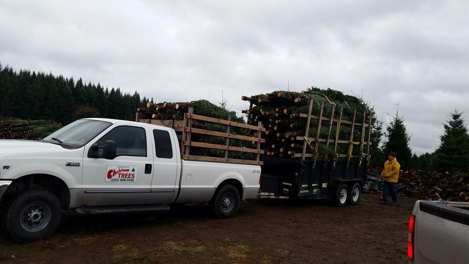 Massachusetts Christmas Tree Farms