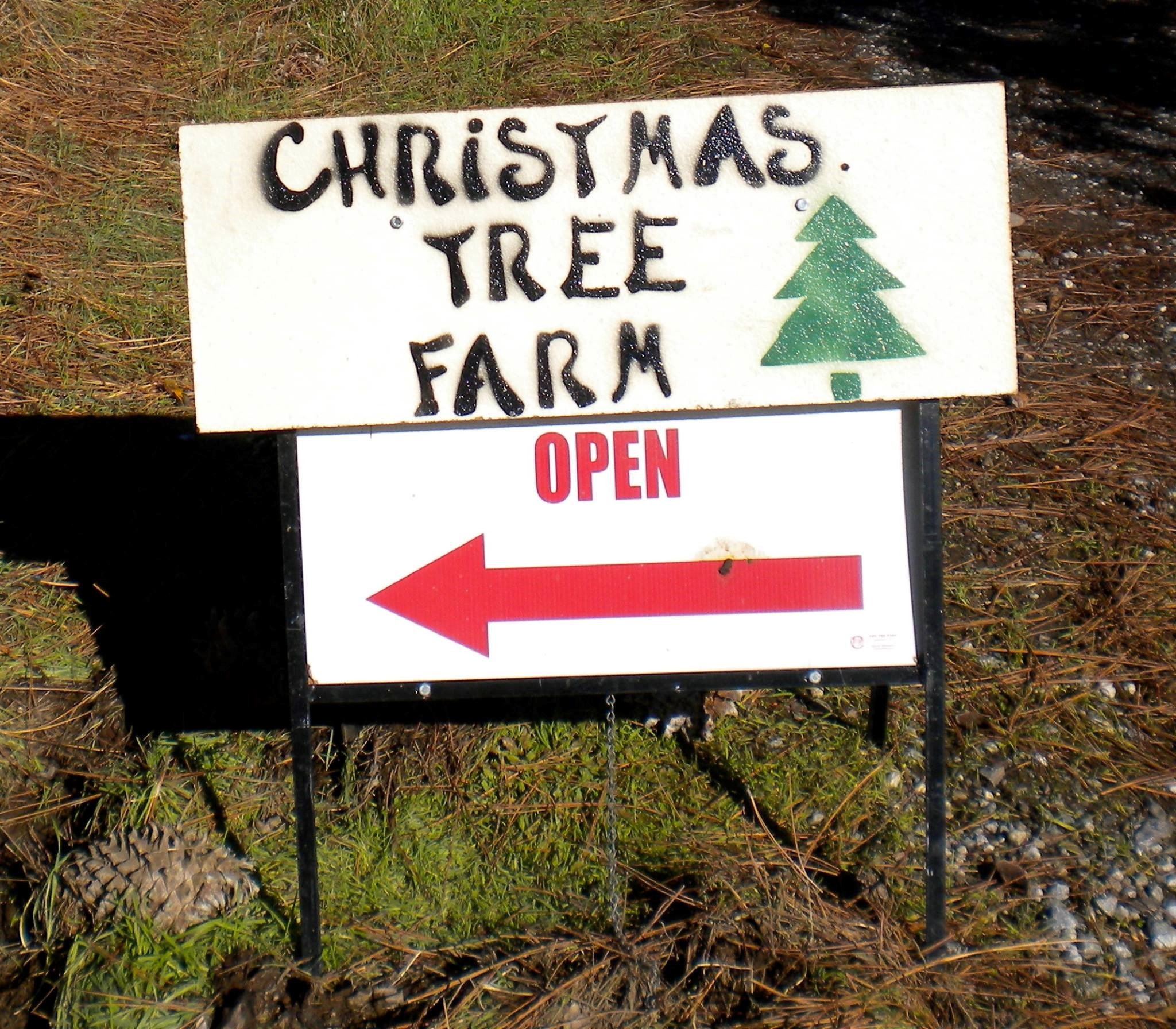 Cut Your Own Christmas Tree York Pa: Anderson Christmas Tree Farm Christmas Tree Farm