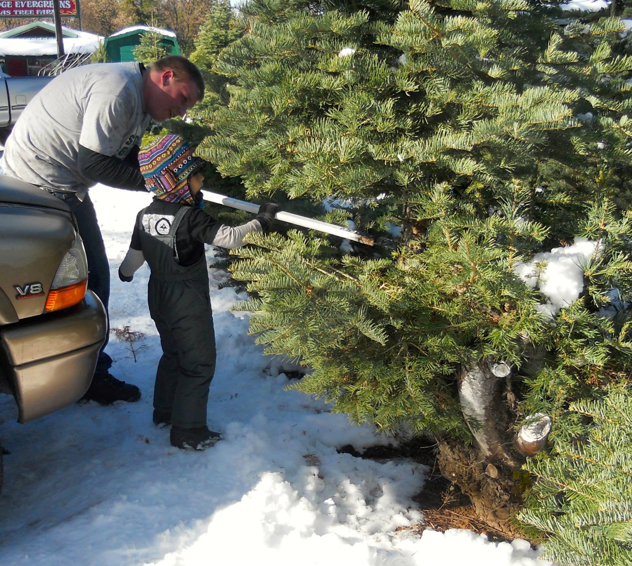 Christmas Tree Garden Ridge: Carson Ridge Evergreens Christmas Tree Farm