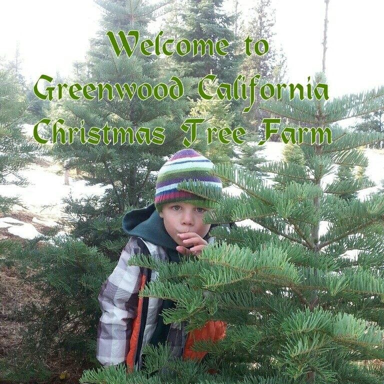 Cut Your Own Christmas Tree York Pa: Greenwood Christmas Tree Farm Christmas Tree Farm