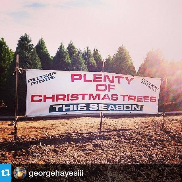 Cut Your Own Christmas Tree York Pa: Brea Tree Farm Christmas Tree Farm