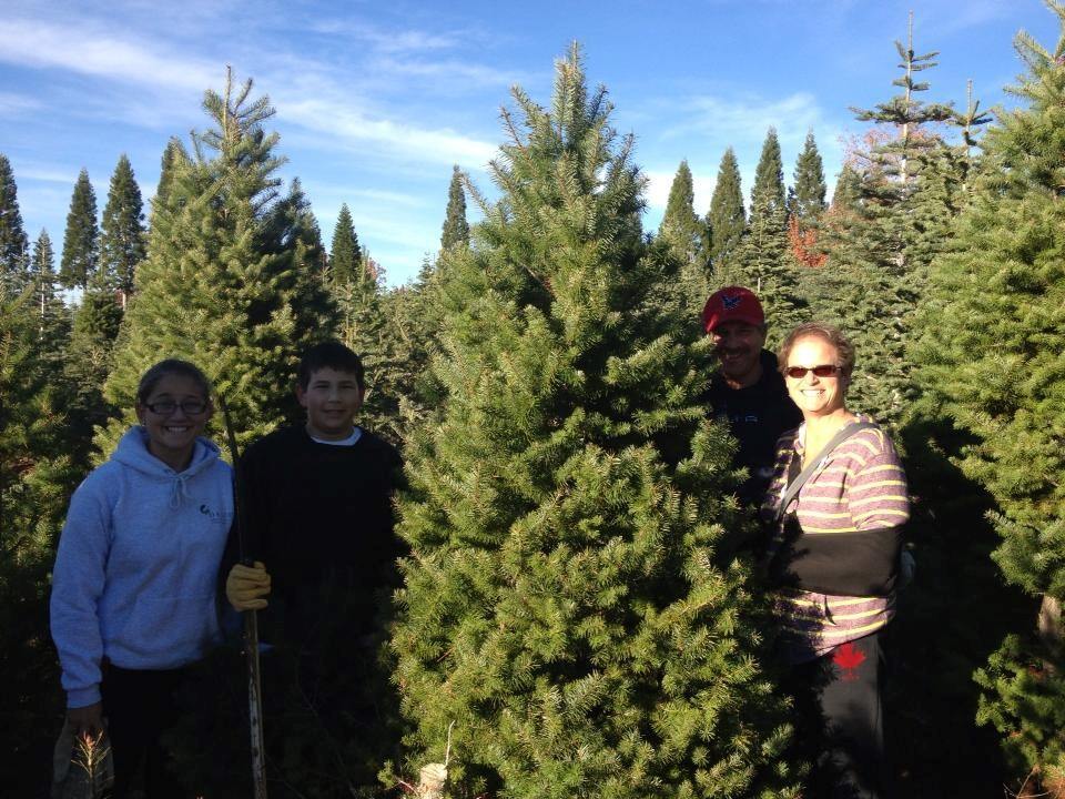 McGee Christmas Tree Farm Christmas Tree Farm