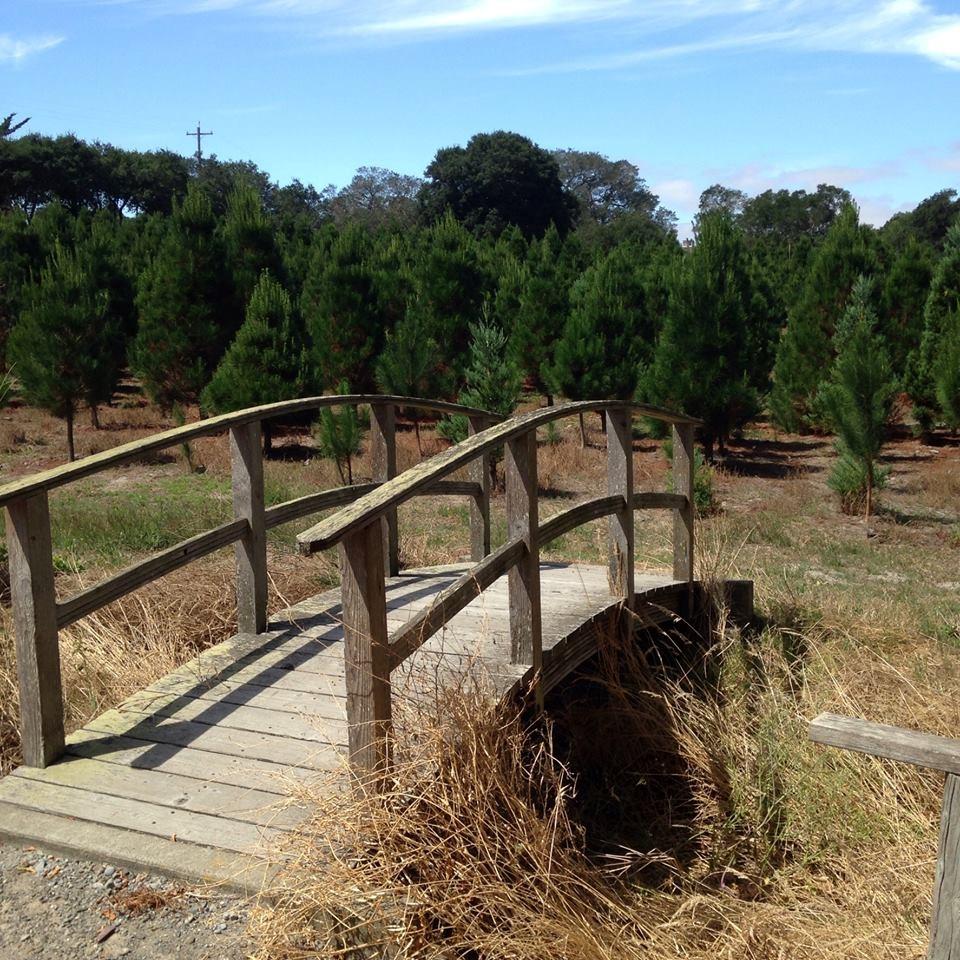 Cut Your Own Christmas Tree York Pa: Larsen's Christmas Tree Farms Christmas Tree Farm