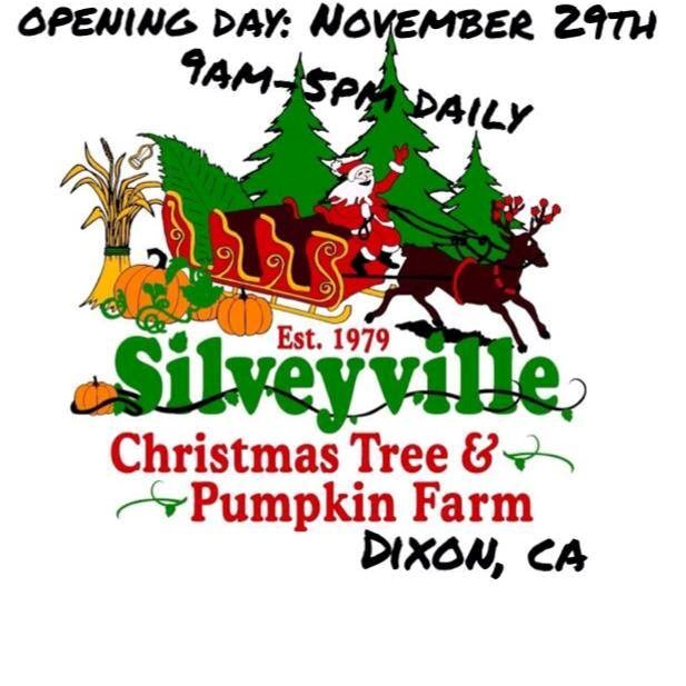 Cut Your Own Christmas Tree York Pa: Silveyville Christmas Tree Farm Christmas Tree Farm
