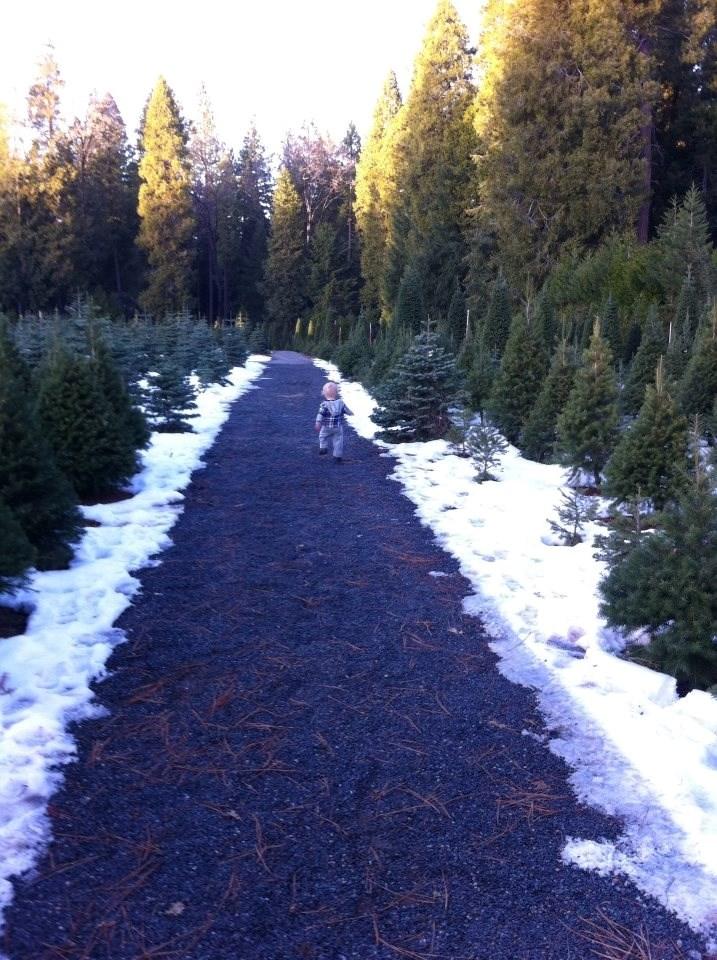McBurney Christmas Tree Farm christmas tree farm ...