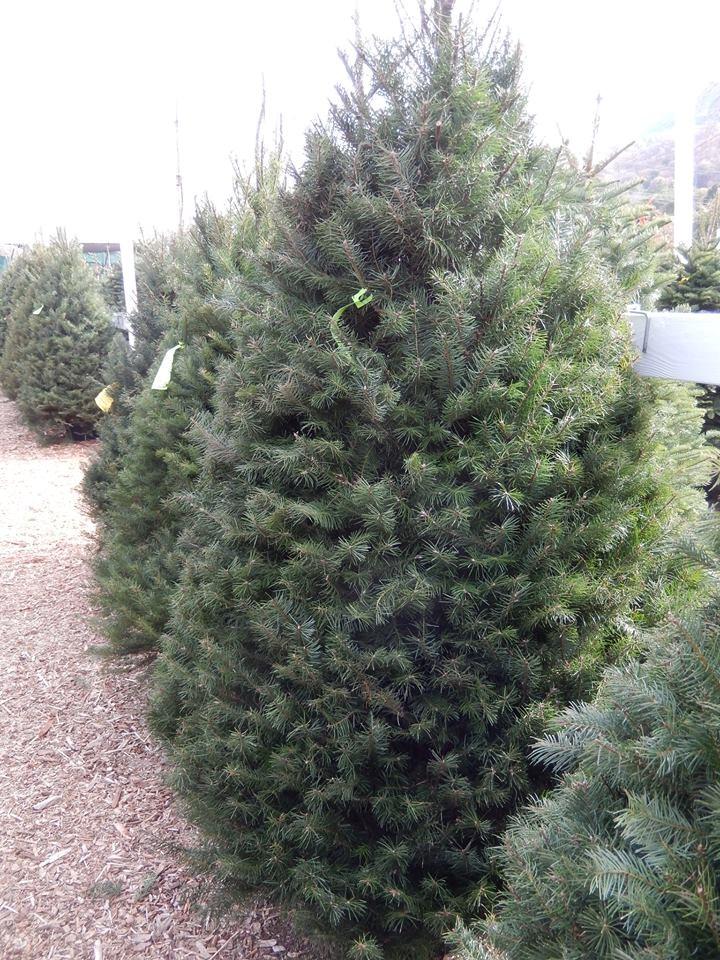 Clayton Valley Pumpkin Farm & Christmas Trees - 1060 Pine ...