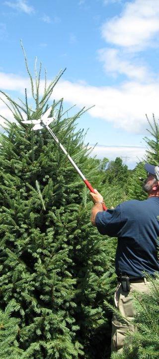 Abraczinskas Nurseries Inc Christmas Tree Farm