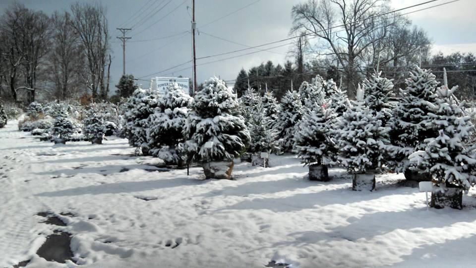 Tower View Farm And Nursery Christmas Tree Farm