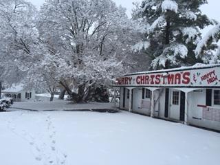 Lebanon ohio christmas tree farmer