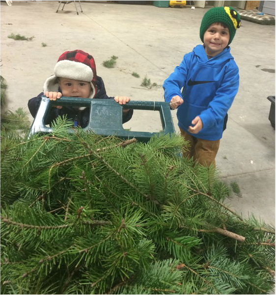 Cut Your Own Christmas Tree York Pa: Double M Tree Farm Christmas Tree Farm