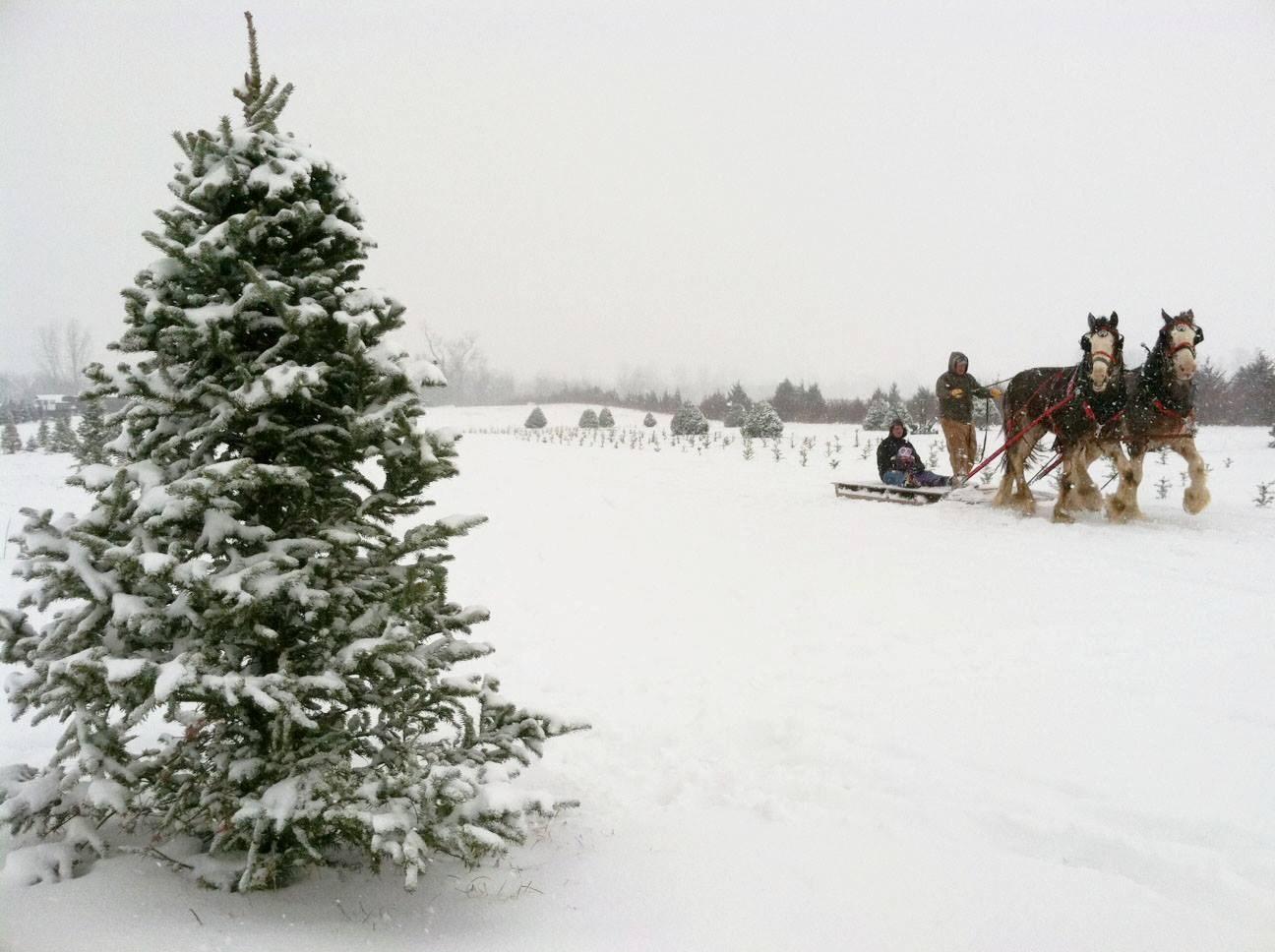 Kaleidoscope Farms LLC christmas tree farm | ChristmasTreeFarms.net