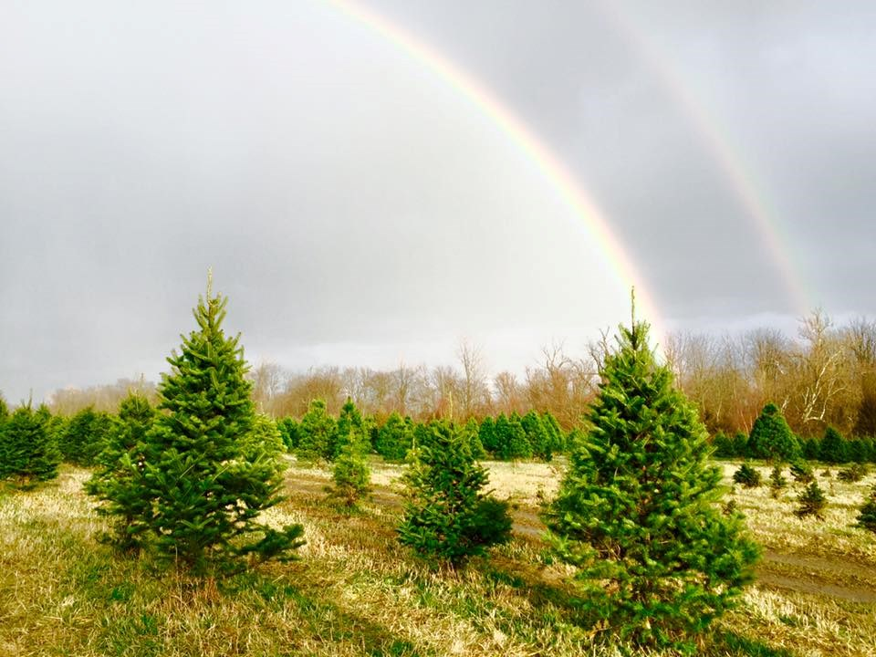 Kaleidoscope Farms LLC Christmas Tree Farm