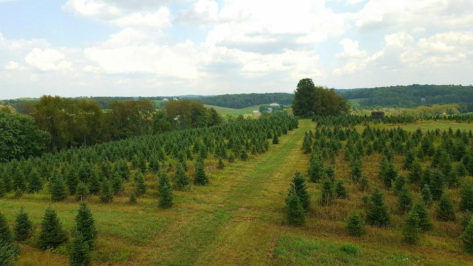 Smith Evergreen Nursery Christmas Tree Farm