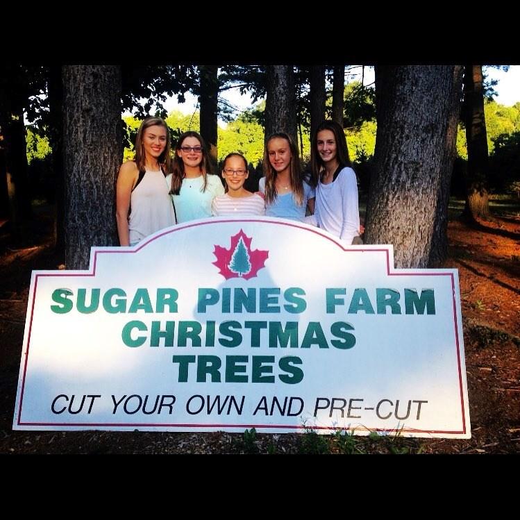 Cut Your Own Christmas Tree York Pa: Sugar Pines Farm Christmas Tree Farm