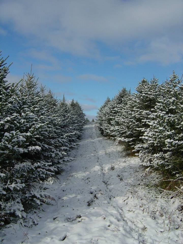 Wisconsin Christmas Tree Farms
