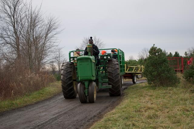 Wilcox Farms Inc. christmas tree farm | ChristmasTreeFarms.net