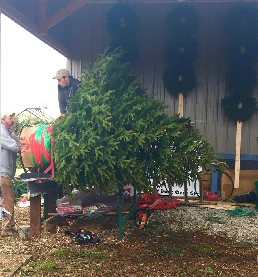 Christmas Tree Farm Southern California: Timberpeg Tree Farm Christmas Tree Farm
