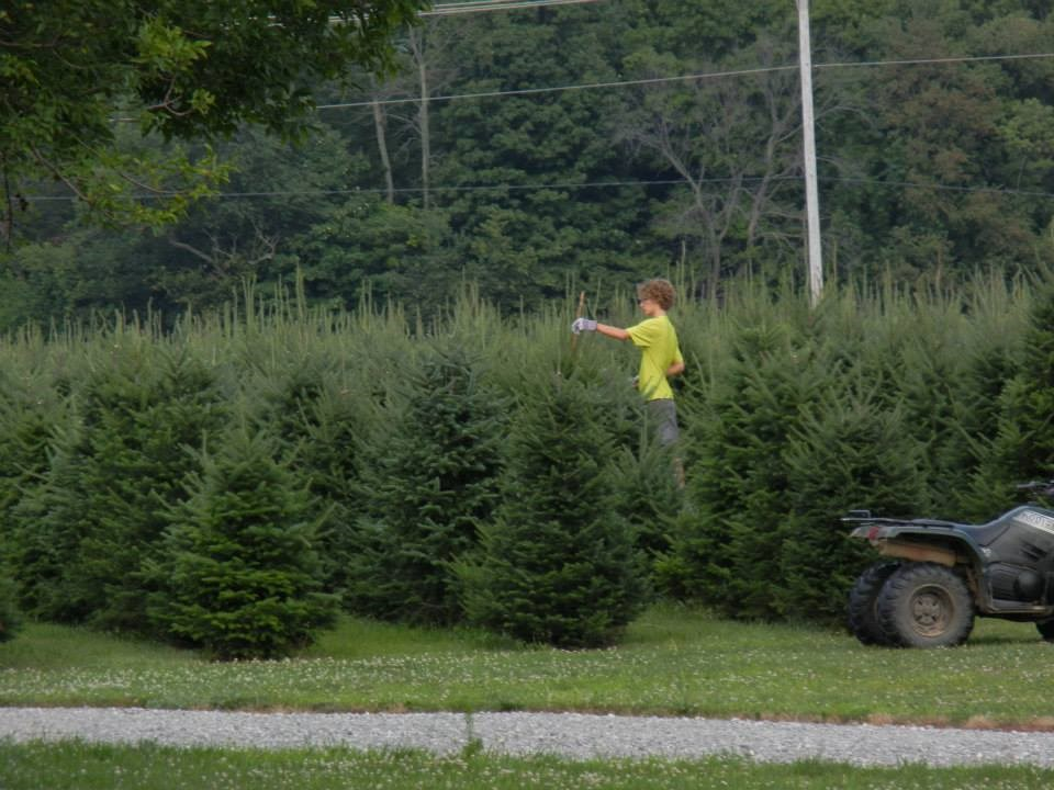 Advent Christmas Tree Farm christmas tree farm ...