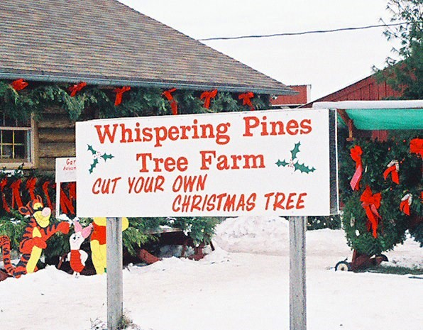 Whispering Pines Tree Farm, Thome Road Christmas Tree Farm