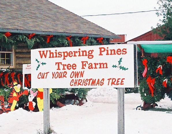 Georgia Christmas Tree Farms