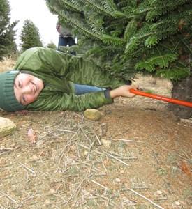 Harmony Hill Evergreens, LLC christmas tree farm ...