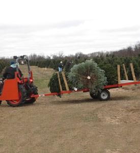 Harmony Hill Evergreens, LLC christmas tree farm | ChristmasTreeFarms.net
