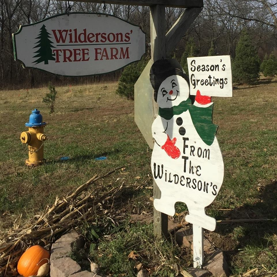 Cut Your Own Christmas Tree York Pa: Wilderson Tree Farm Christmas Tree Farm