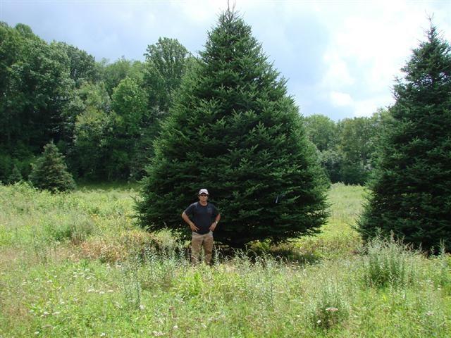 KaJiN Christmas Tree Farm