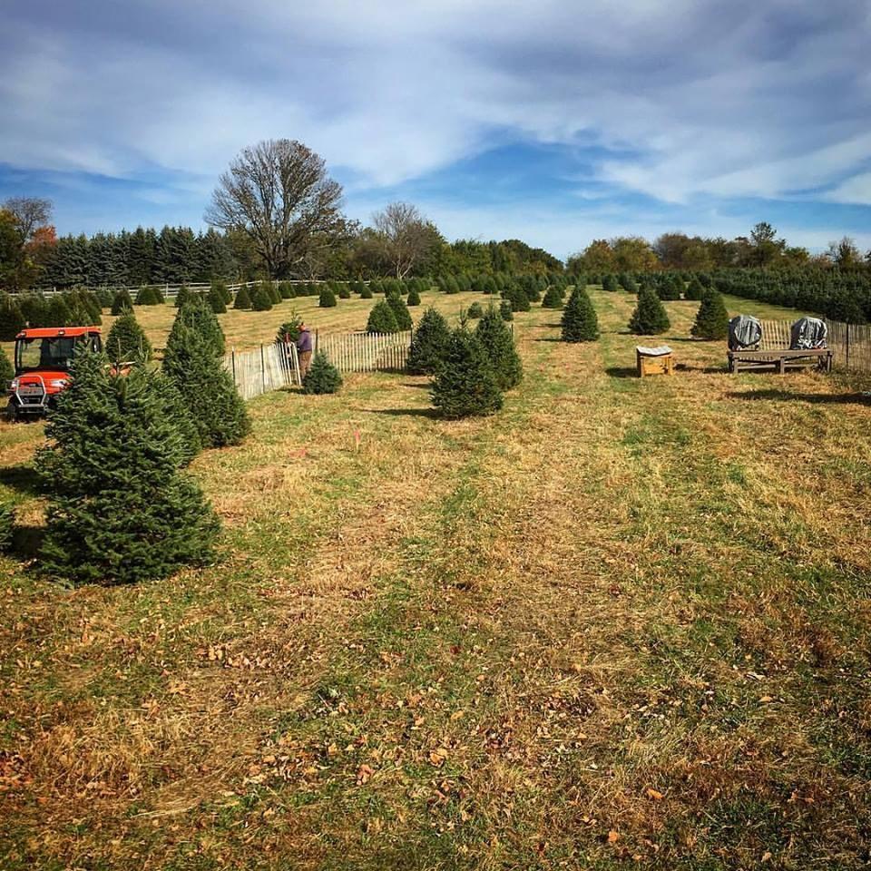 Cut Your Own Christmas Tree York Pa: Cherryville Farms Christmas Tree Farm