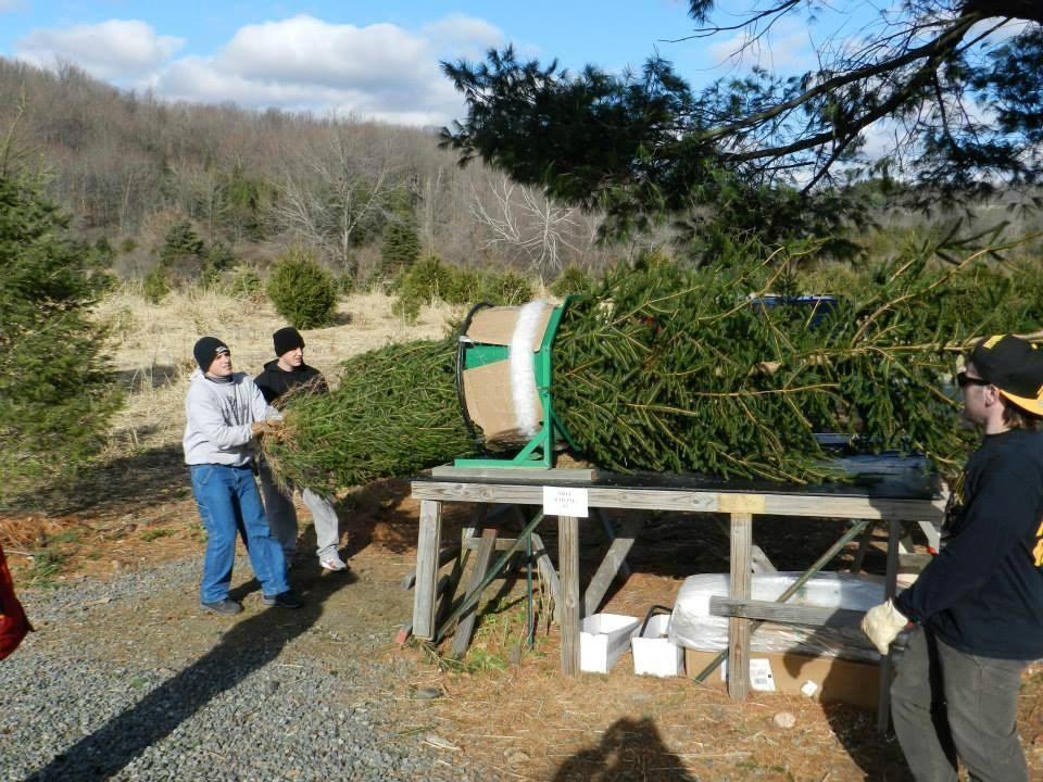 Christmas Tree Farms Colorado