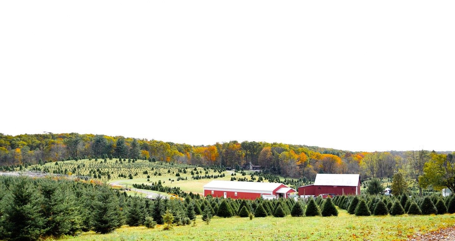 Davidson Christmas Tree Farm - Upperco, MD 21155