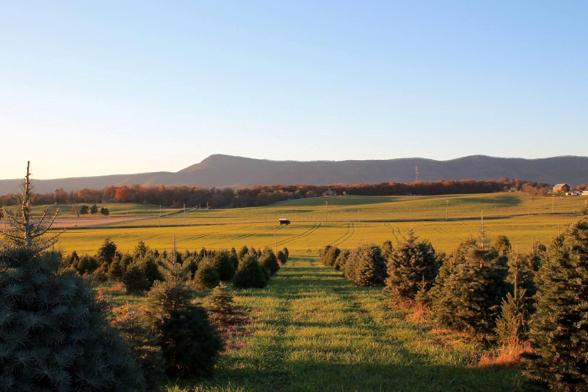 Valley Star Farm christmas tree farm | ChristmasTreeFarms.net