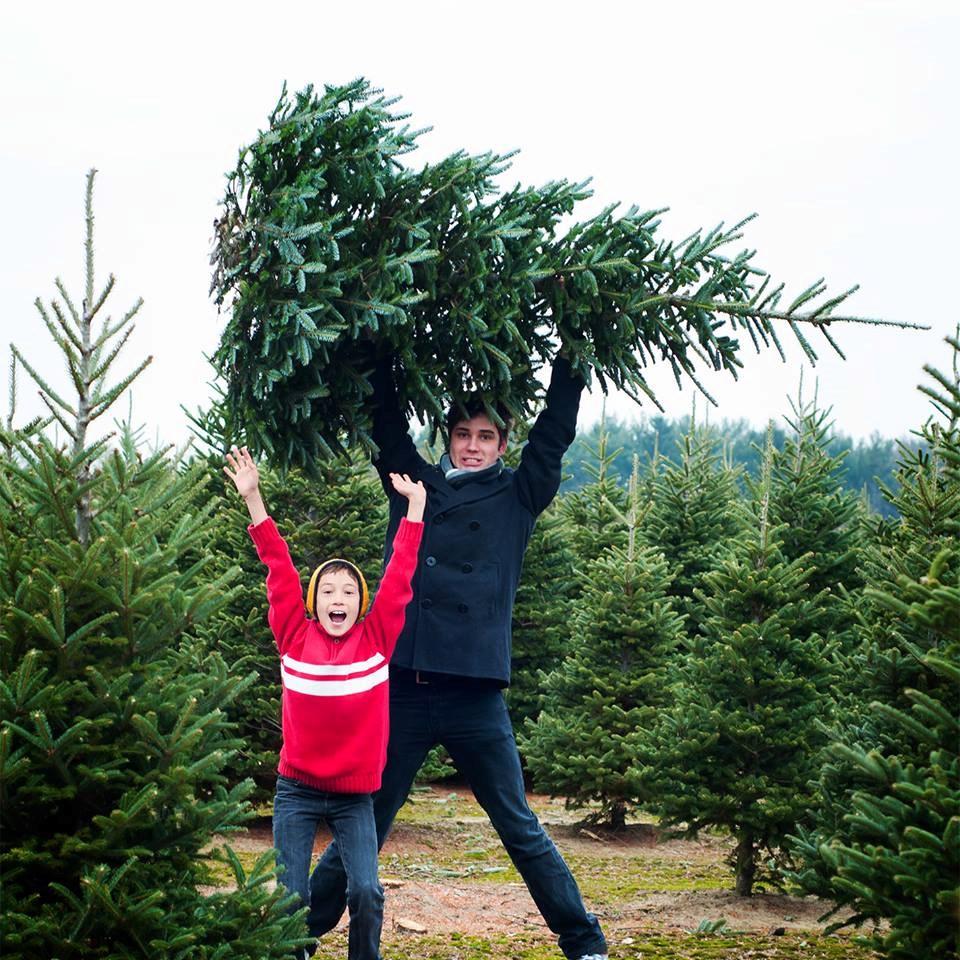 Cut Your Own Christmas Tree York Pa: Lil' Grandfather Choose & Cut Christmas Tree Farm