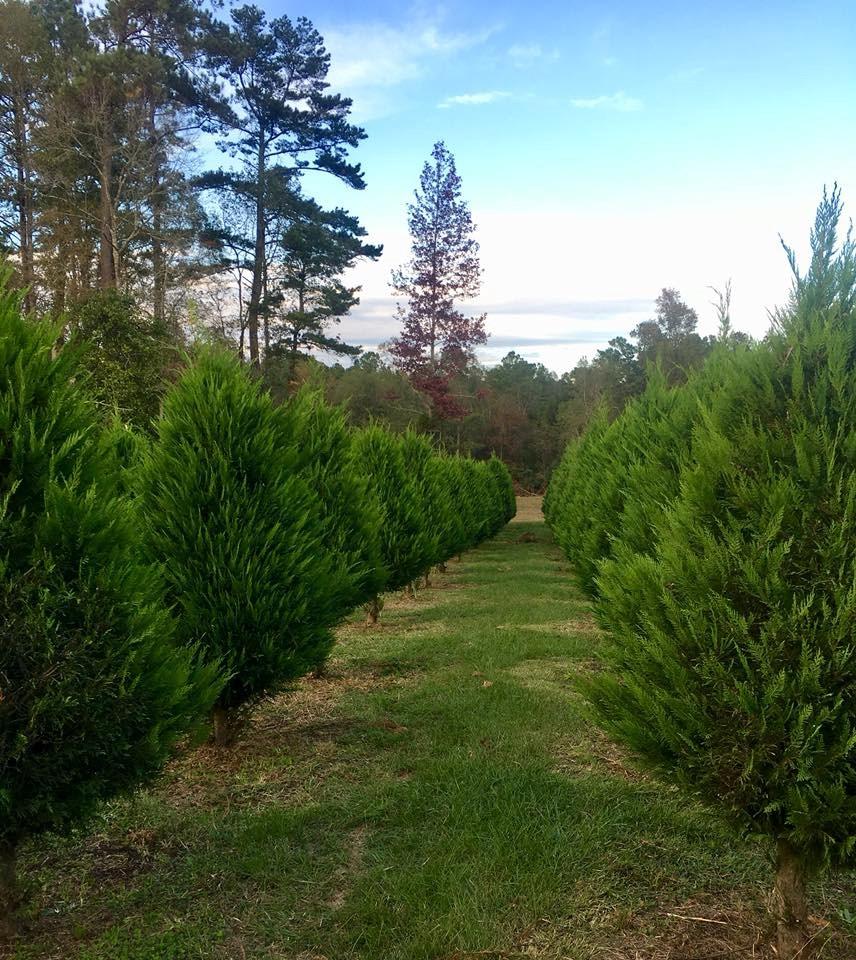 Timberhill Christmas Tree Farm christmas tree farm ...