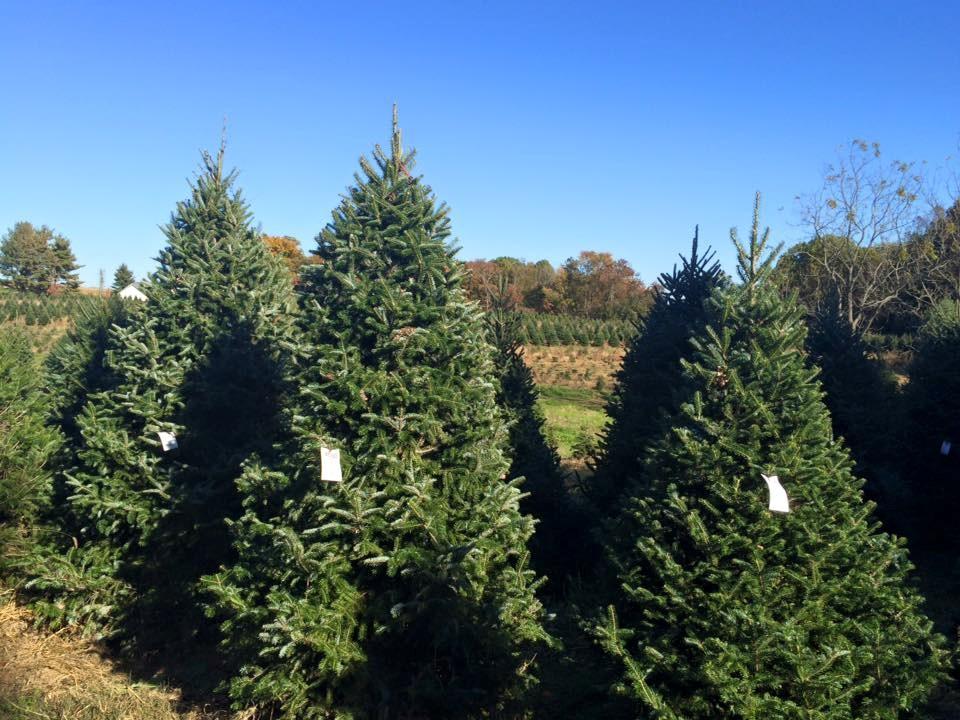 Pine Valley Christmas Trees, LLC christmas tree farm ...