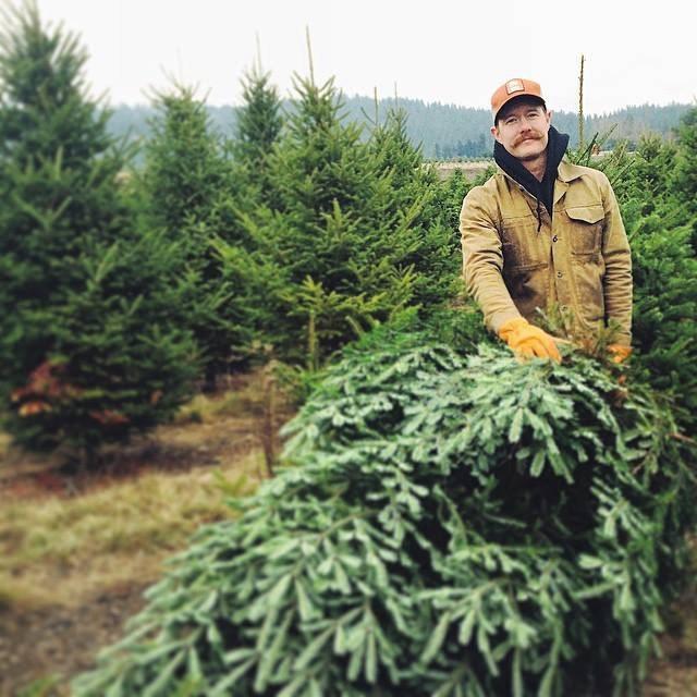 Christmas Tree Farms In North Georgia: Carver Farms Christmas Tree Farm