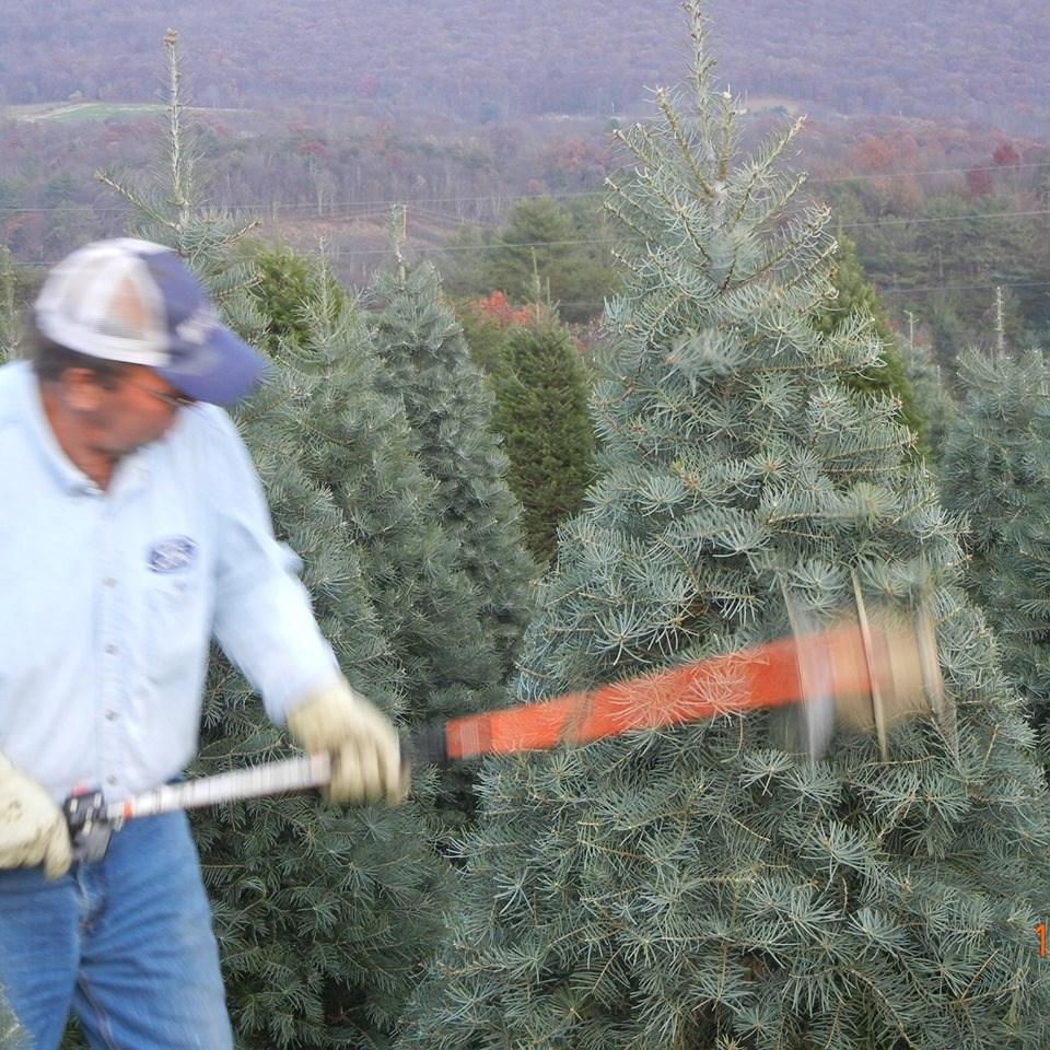 Cut Your Own Christmas Tree York Pa: Brush Creek Evergreens Christmas Tree Farm