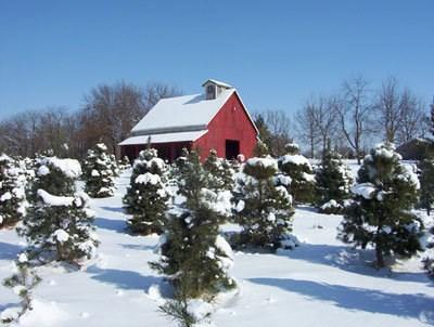 Christmas Ranch Tree Farm - Excelsior Springs, MO 64024