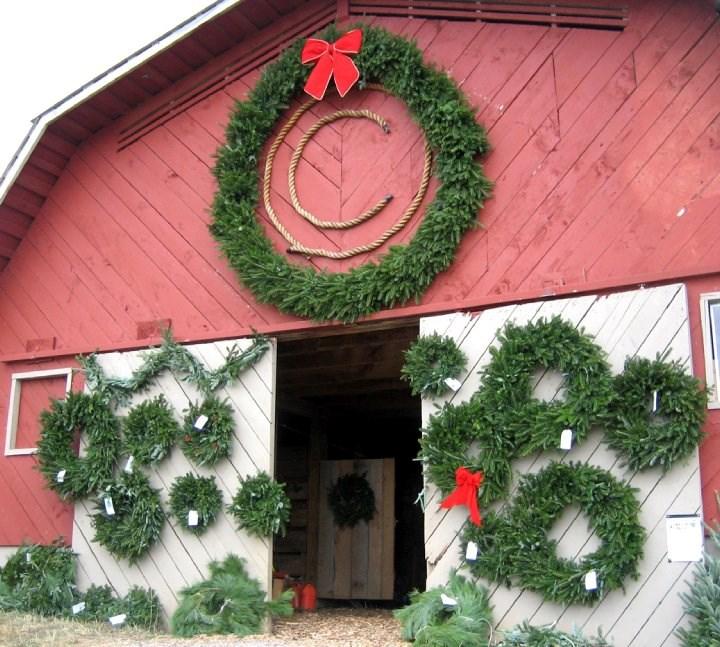 Cut Your Own Christmas Tree York Pa: Circle C Tree Farms Christmas Tree Farm