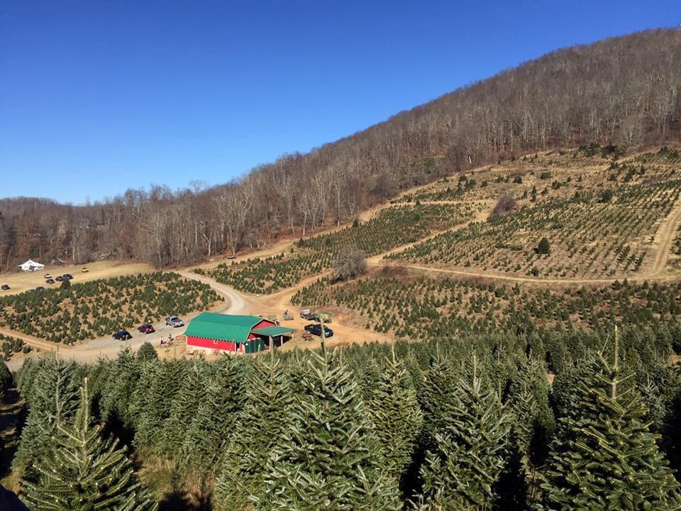 Circle C Tree Farms christmas tree farm | ChristmasTreeFarms.net