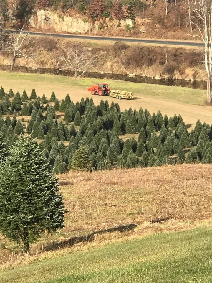 Clark's Evergreens and Landscaping christmas tree farm | ChristmasTreeFarms.net